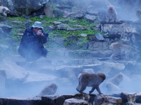 Antusias fotografer terhadap Macaca