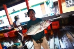 Ikan sebesar ini? Setiap hari juga ada.